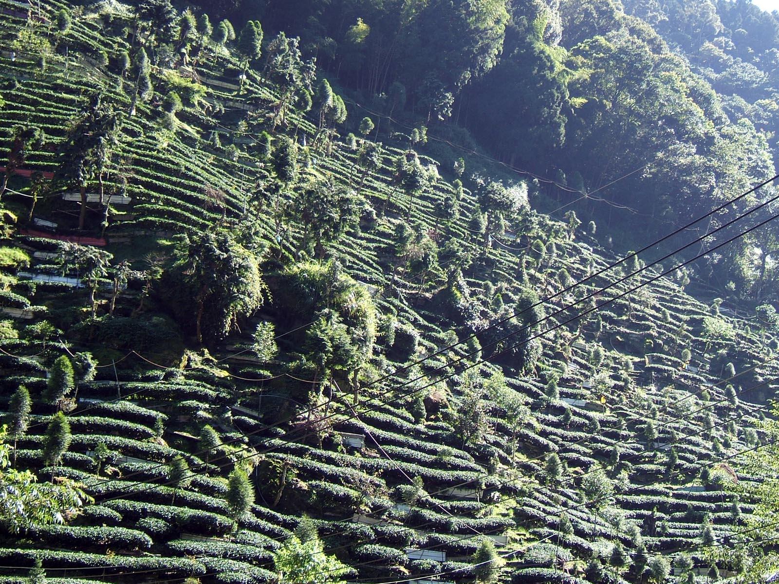 Taiwan Feiertage Klima Landessitten Länder Taiwan Goruma